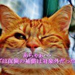 猫エイズは保険対象外なの知ってますか!?わが国の保険事情や検査費用について語ります