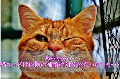 猫エイズ-保険-対象外