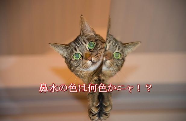 猫-鼻水の色