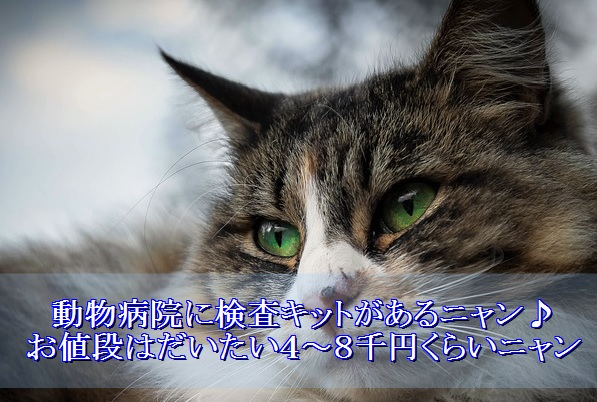 猫エイズ-検査キット-費用-値段