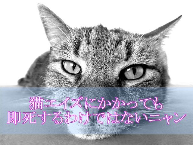 猫エイズ-即座に死なない寿命も個体差による