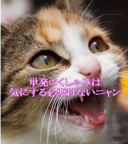 猫-単発のくしゃみ-気にする必要はない