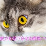 猫エイズの感染率は日本がダントツで多いってマジ!?症状や感染経路や予防について語ります