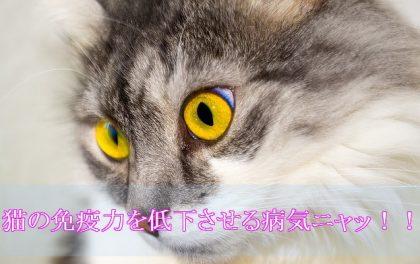 猫エイズとは