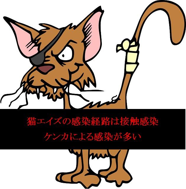猫エイズ-感染経路-ケンカが多い