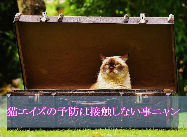 猫エイズ予防-他の猫との接触を避ける