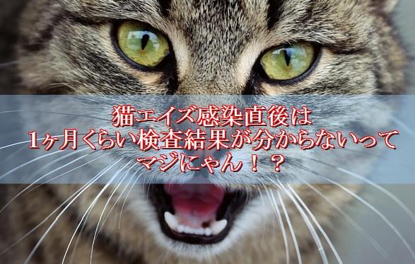 猫エイズ-感染直後は陰性と判定される場合がある