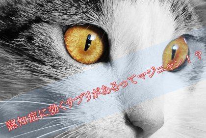 猫-認知症に効くサプリメント-フェルガード