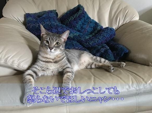 猫-認知症-症状-そこら辺で排泄する