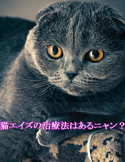lol-猫エイズ-治療法-対症療法