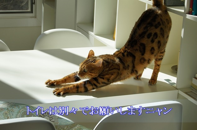 猫エイズ-トイレは別々にする