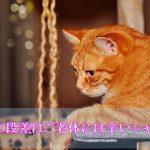 猫が認知症でトイレ以外で排泄をしてしまう場合の4つの対策案