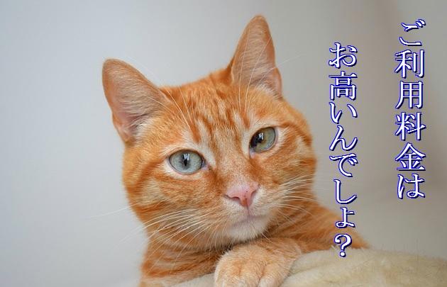 猫-老猫ホーム-ご利用料金