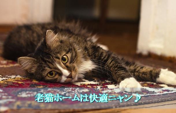 猫-老猫ホーム-快適な環境作りを意識
