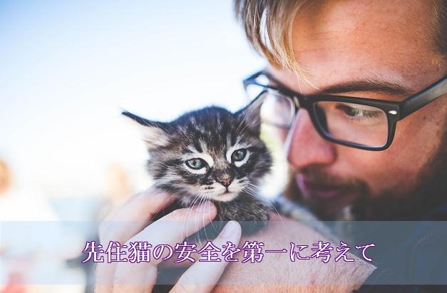 先住猫の安全第一