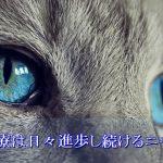猫が認知症になった場合に病院で薬を処方してもらうのは悪なのか?