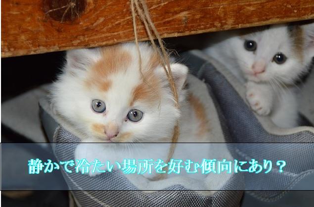 猫-認知症-夜鳴き-寝床