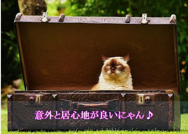 猫-ゲージ-隔離-悪いことではない