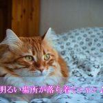 猫の認知症で夜鳴きがひどい場合の3つの対策案