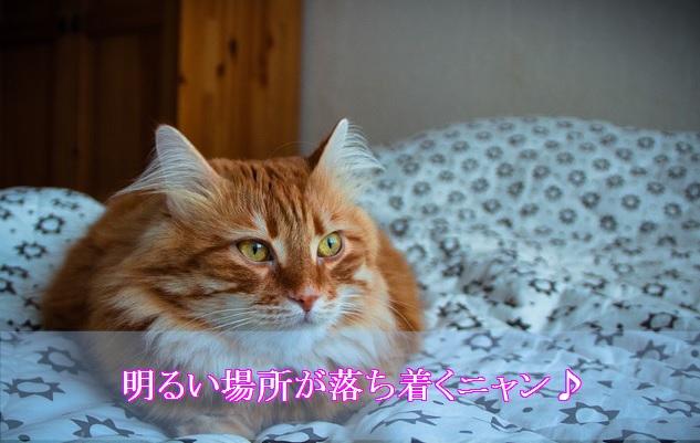 猫-認知症-夜鳴き-明るい場所と音