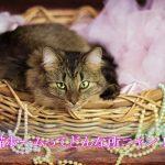 猫にも老人ホームと同じ老猫ホームがあるの知ってる?認知症の介護に頼もしい施設をご紹介します