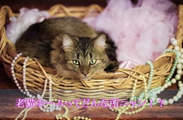 猫-老猫ホームはどんなところ?