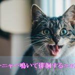 飼い主を悩ませる猫の認知症の主な症状3つ