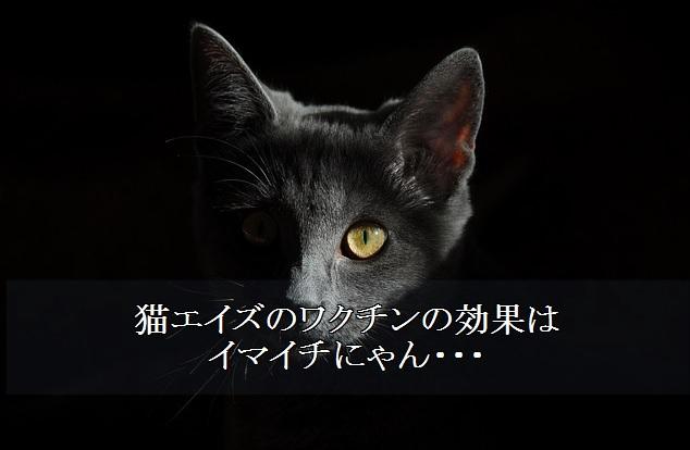 猫エイズ-ワクチン-効果-イマイチ