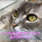 猫の認知症で介護疲れ…そこで他人に預けるのはアリか?ナシか?