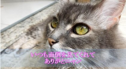 猫-認知症-介護疲れ-飼い主に感謝