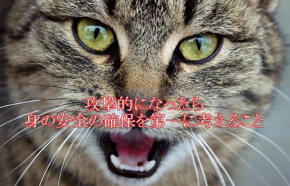 猫-認知症-症状-攻撃的になる