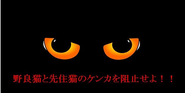 猫エイズキャリア-先住猫とのケンカを阻止すること