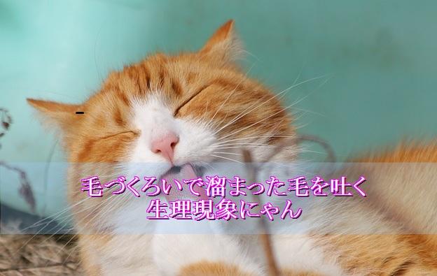 猫-嘔吐-原因-毛玉を吐く