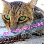 猫がエサを吐く場合の3つの対策案