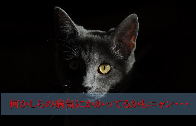 猫-嘔吐-原因-何かしらの病気が悪さしている