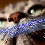 猫の嘔吐には正常と異常があるの知ってる!?嘔吐の危険サインを見極めよう!!