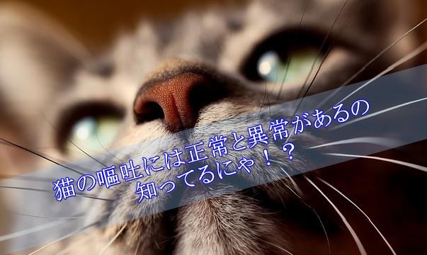猫-嘔吐-正常と異常
