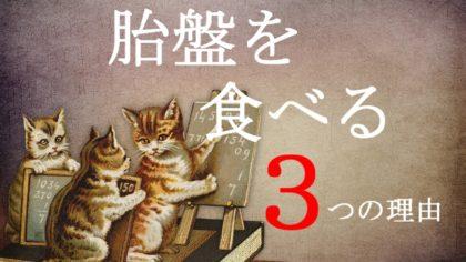 猫が胎盤を食べる3つの理由