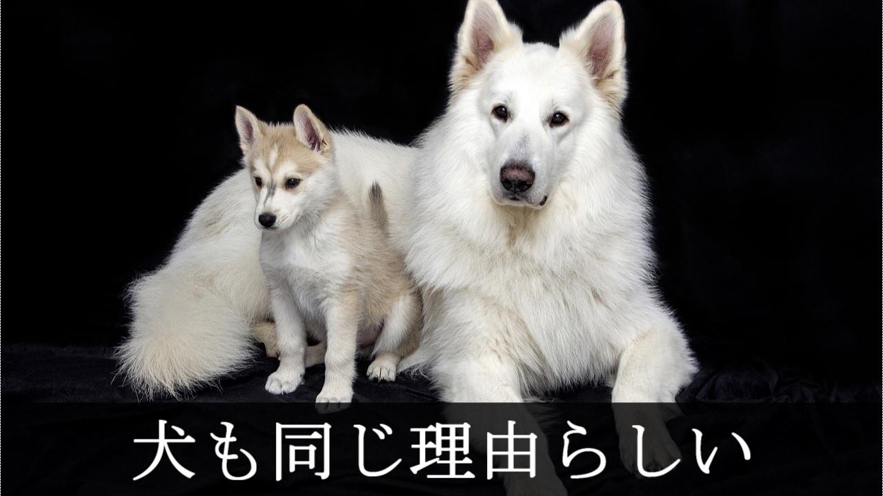 胎盤を食べる理由 - 犬も同じ
