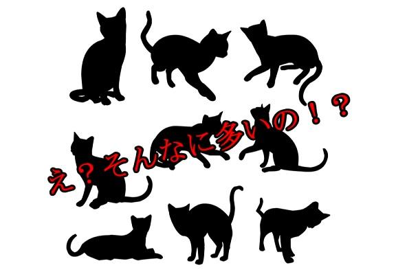 野良猫の糞の被害-数