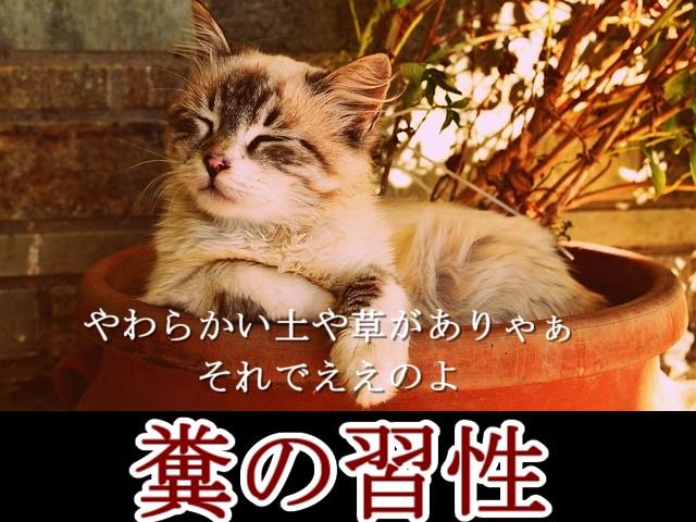 2-猫が糞をする習性