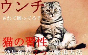 1-野良猫の効果的な7つの撃退方法