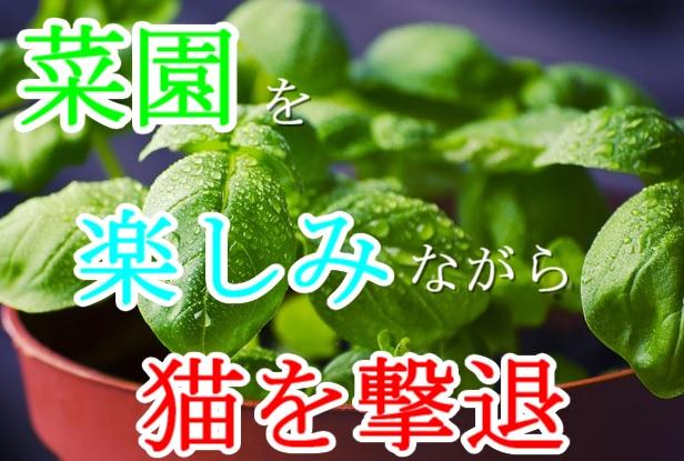 8-野良猫-撃退-避け草-植物