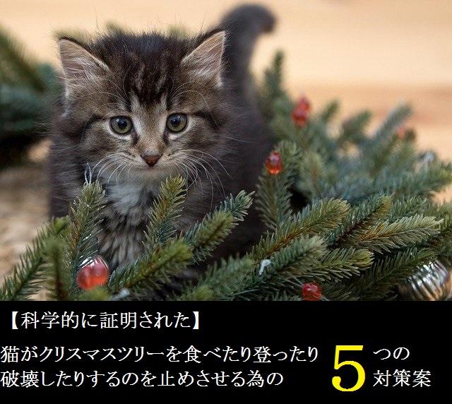 猫がクリスマスツリーを食べたり登って破壊したりするのを止めさせる為の5つの対策案