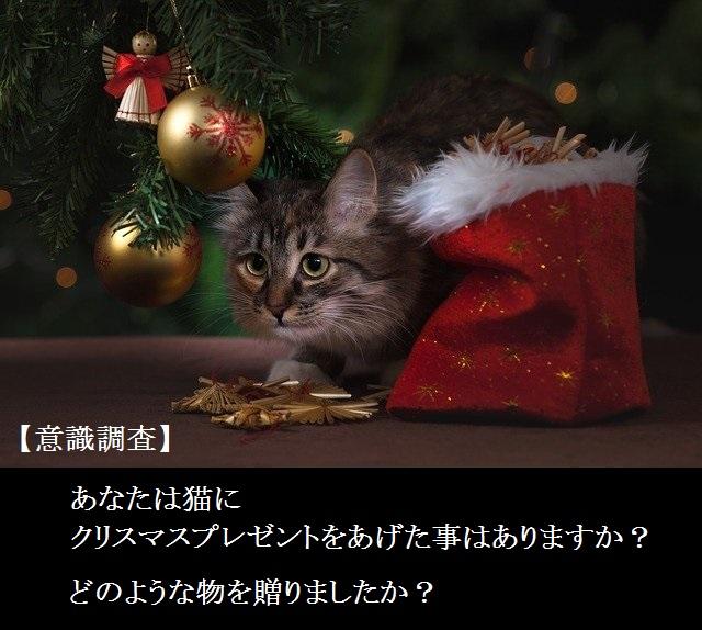 【意識調査】あなた猫にクリスマスプレゼントをあげますか?どのような物を贈りましたか?