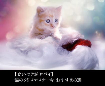 【食いつきがヤバイ】猫のクリスマスケーキ おすすめ3選